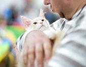 Maine Coon kitten in the hands of the owner — Stock Photo