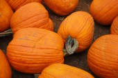 Pumpkin fruit — Stock Photo