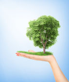 Eco concept. Hand of nature holding a big tree. — Foto Stock