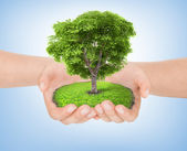 Eco concept. Hand of nature holding a big tree. — Stock Photo