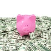 Money dollar dollars business money box pig credit bank savings — Stock Photo