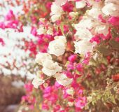 Plant of pink flowers in sunny day — Photo