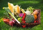 Legumes frescos na cesta — Fotografia Stock