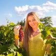 Woman winegrower picking grapes at harvest time — Stock Photo #64980069