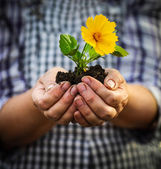 Woman holding a green young plant with yellow flower in her hand — Stock Photo