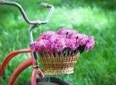 Zabytkowych rowerów z kosz z kwiatami piwonii — Zdjęcie stockowe