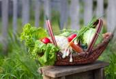 Fresh organic vegetables in the basket — Stock Photo