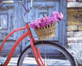 Vintage bicycle with basket with peony flowers  — Stock Photo