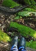 Bottes en caoutchouc sur le fond de mousse — Photo