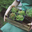 Woman holding a box with plants in her hands in garden center — Stock Photo #77771066