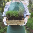 Woman holding a box with plants in her hands in garden center — Stock Photo #78267714
