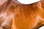 Horseback isolated, animal body part close up. — Stock Photo