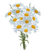 White realistic daisies isolated — Vector de stock