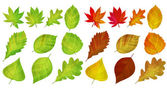 Set with different autumn leaves — Stock Vector