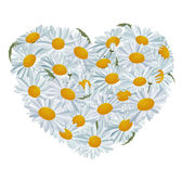 Heart made of white daisies — Stock Vector