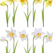 Set with white and yellow realistic daffodils — Stock Vector #66932429