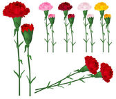 Red carnations isolated on white — Stock Vector