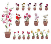 Flowers growing on window sills. Gerbera, tulip,daffodil and others isolated — ストックベクタ