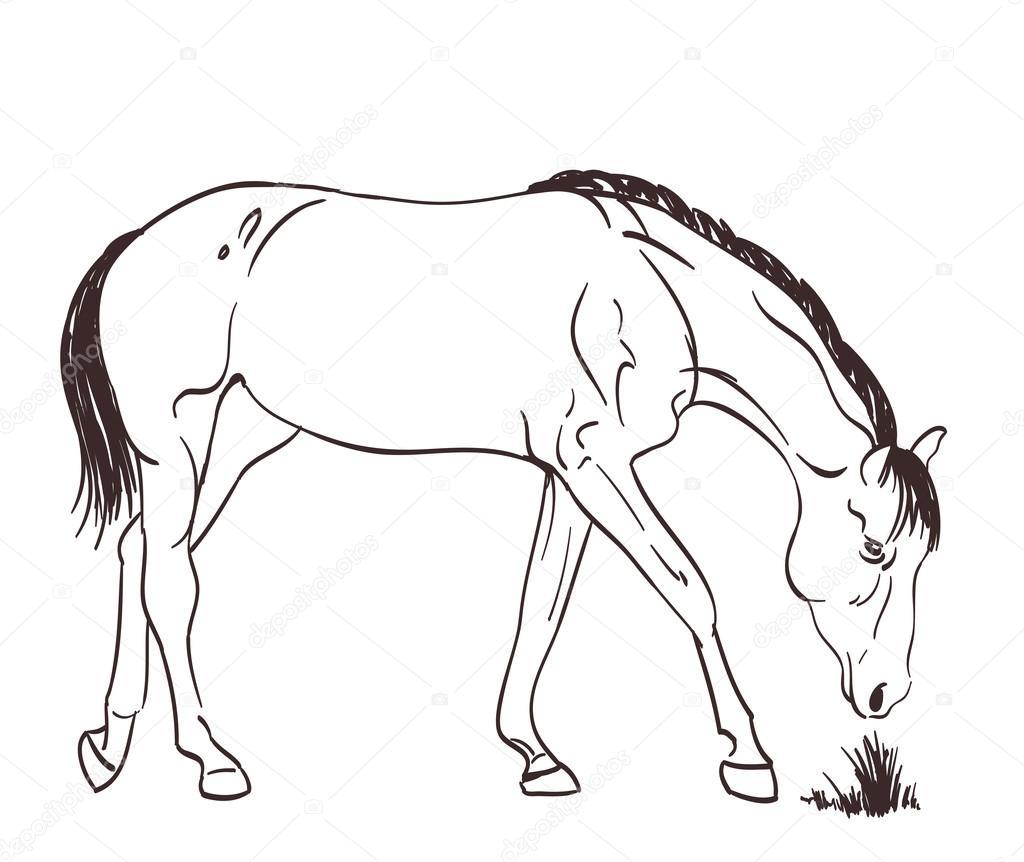 Cavalo comendo grama. ilustração de desenho vetorial ...