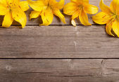 Yellow lily on wooden background — Stock Photo