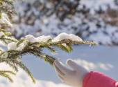 Hand and branch of fir outdoor — Stock Photo