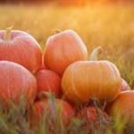 Pumpkins outdoor — Stock Photo #53659999