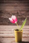 Pink tulip in pot on wooden background — Stock Photo