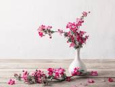 Apple flowers on grunge white background — Stock Photo