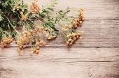 Yellow flowers of tansy on the wooden background — Stock Photo