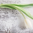 White tulip over wooden background — Stock Photo #68173883