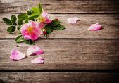 Pink rose on wooden background — Stock Photo