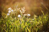 White flowers on meadow — Stock Photo