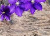 Violet flowers on wooden background — Stock Photo
