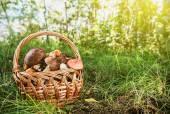 Brown cap boletus in a basket — Stock Photo
