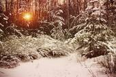 Early morning in the winter forest  — Stock Photo