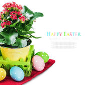 Easter Eggs and spring flower — Stock Photo
