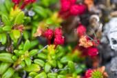 Macro stone vegetation polar leaf summer — Stock Photo