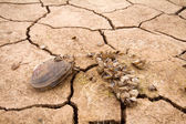 Sea drought change of  climate heat water — ストック写真