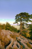 Soothing mountain summer wonderful view — Stock Photo