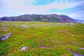 Polar hills Scandinavian tundra in summer — Stock Photo
