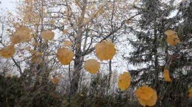 Unusual autumn motif 2 — Stock Video