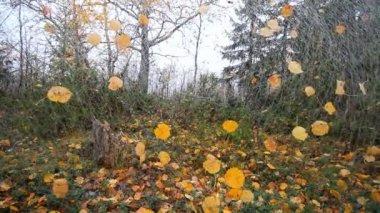 Unusual autumn motif 1 — Stock Video