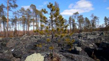 Glacial moraine of huge pieces of granite. — Stock Video
