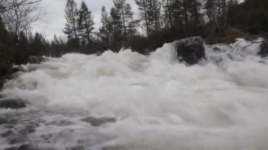 Taiga flowing spring river — Stock Video