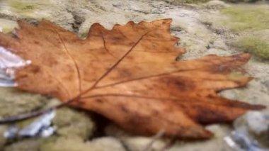 Beautiful maple leaf underwater — Stock Video
