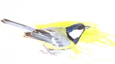Bright spring bird great tit — Stock Video
