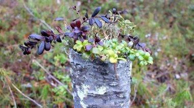 New floral arrangement Natural ikebana 1 — Stock Video