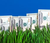 Dollars in the Grass — Stock Photo