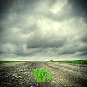 Grass on the Road — Stock Photo