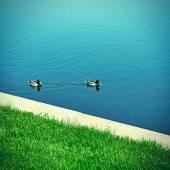 Ducks on the Lake — Stock Photo